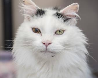 Pilgram's Hoping for a Happy Cat Adoption