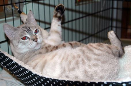 Marley is a Difficult Cat Adoption