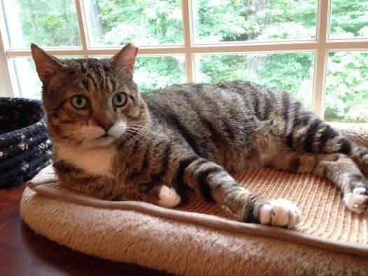 Meet Special Needs Cat Big Daddy