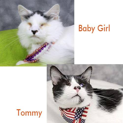 Help Special Needs Cats Baby Girl and Tommy