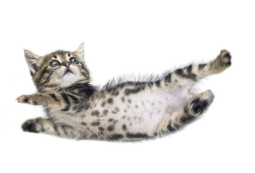 The Common Cat Injury of Soft Tissue Trauma can be Caused by Falling