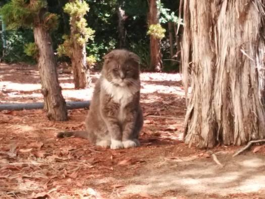 Aztec Cats Colony Member Bruiser