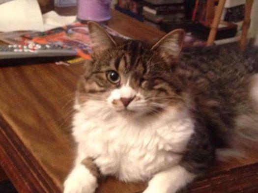 Michigan Cat Rescue's Bindy