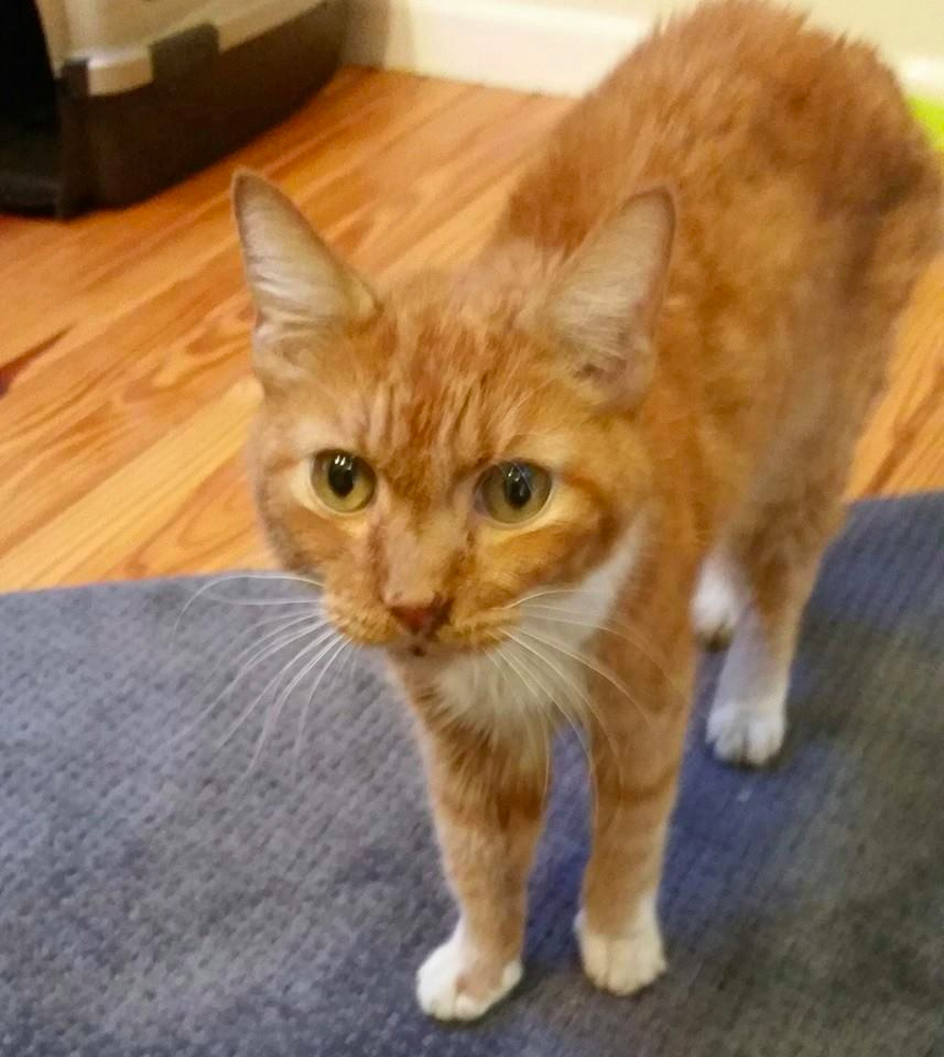 how to start a cat rescue ottawa