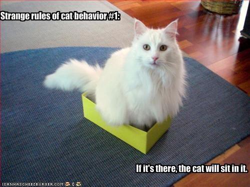 Strange Cat Behavior