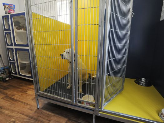 Homeless Animals Can Join Their Humans At Shelter
