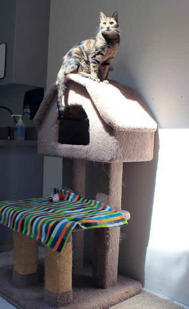 Pete on His Perch