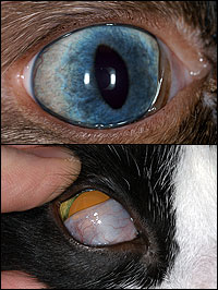 The Difference Between Cat Eyes and Human Ones