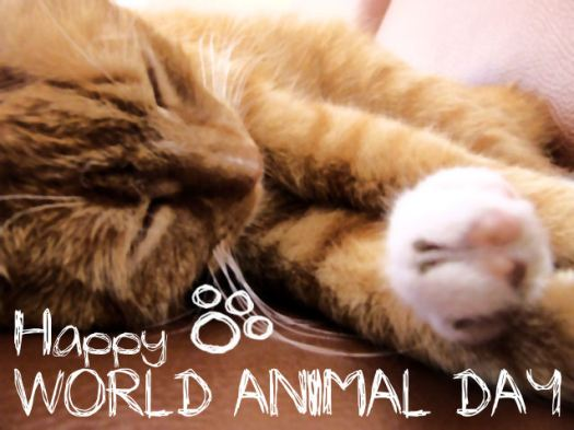 October 4 is World Animal Day