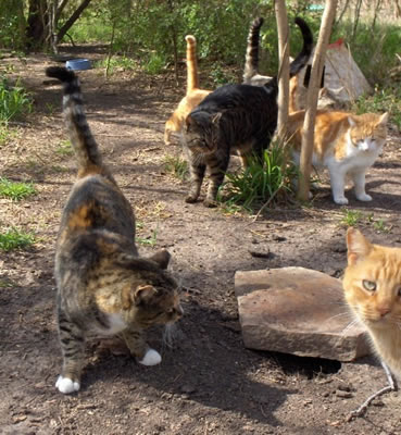 A Feral Cat Colony