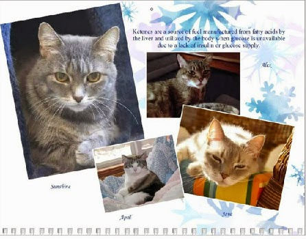 A Sample of the Diabetic Cats In Need Calendar