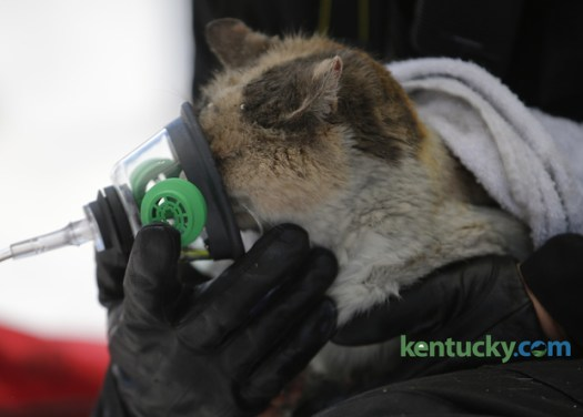 A Cat Rescue Story Spreads Worldwide