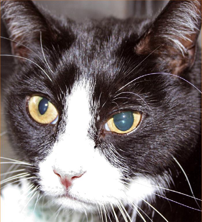 This Cat Has Anisocoria