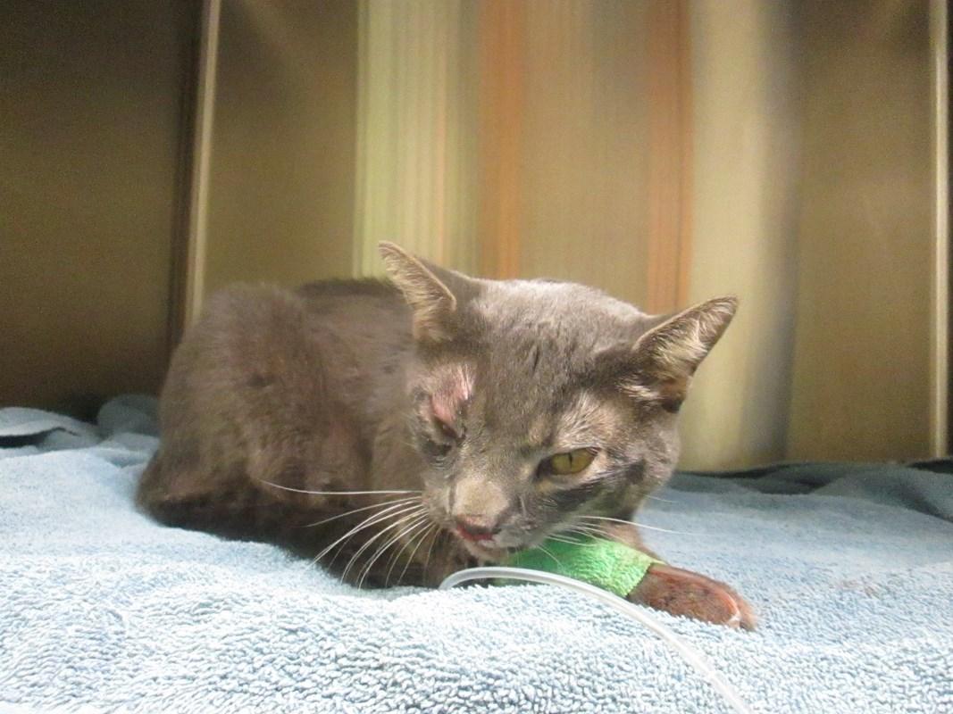 Cat Rescue of Feline Hit by Car