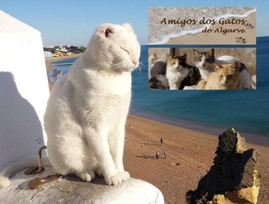 Special Needs Cat Mr. No Ears is Cared for by Amigos dos Gatos do Algorve