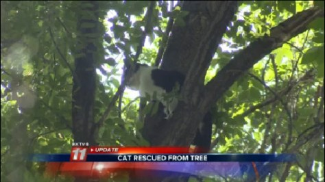 Honey Was Stuck In a Tree for Eight Days