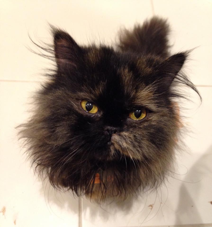 Special Needs Cat Freida is Sick