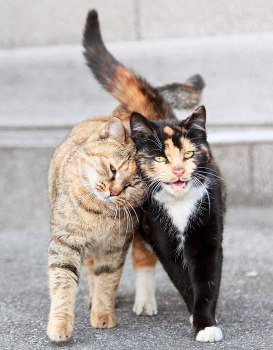 This Cat Behavior Creates a Community Scent