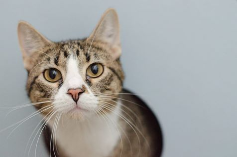 Oilo's Cat Rescue Story Was Possible Because of a Foster