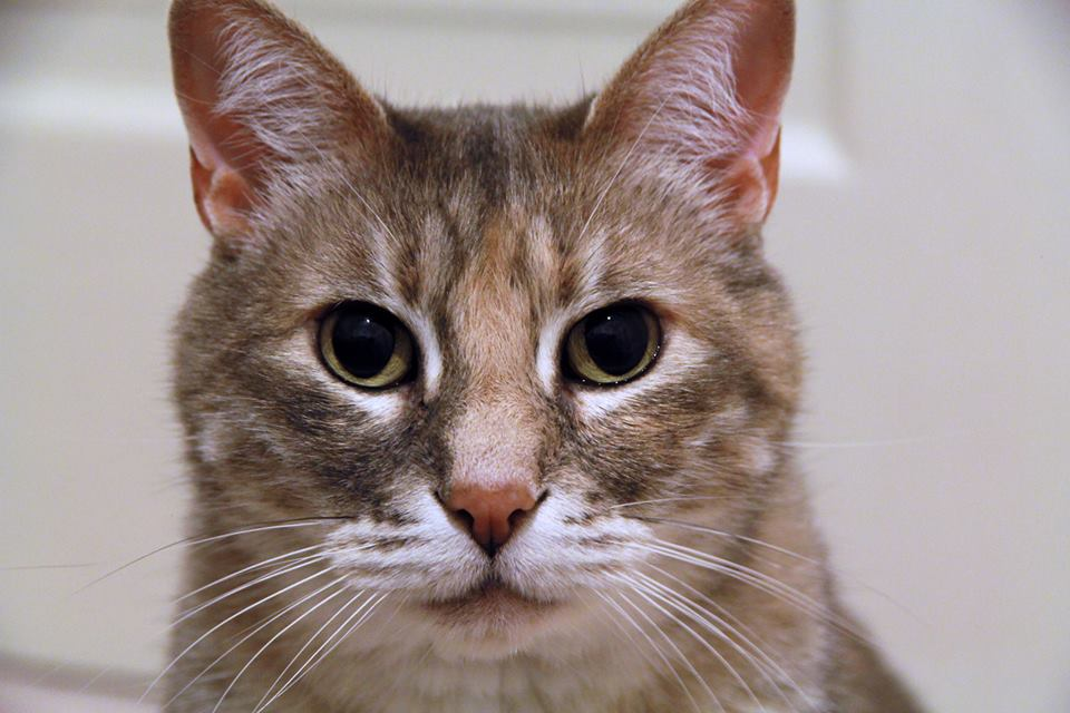Tenth Life Is Looking for a Home for Sasha