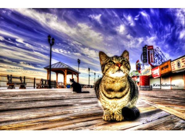A Member of The Seaside Heights Feral Cat Colony