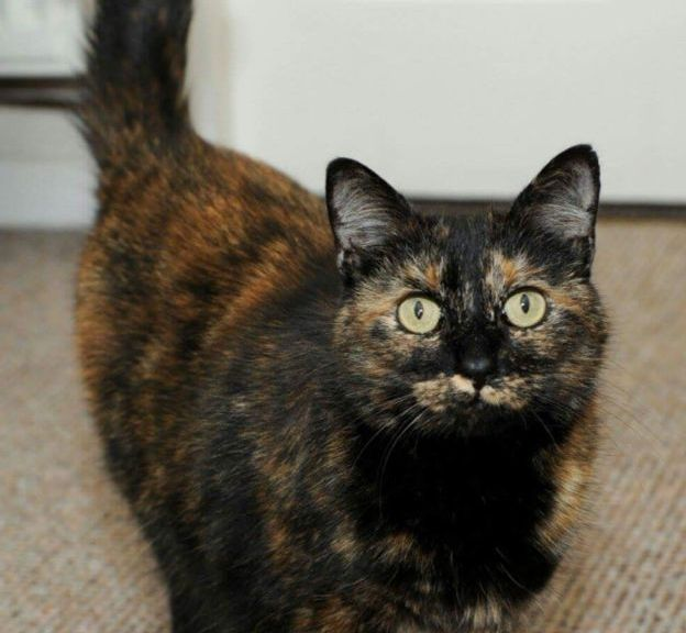 Hero Cat Tink Saved The Lives of Her Humans