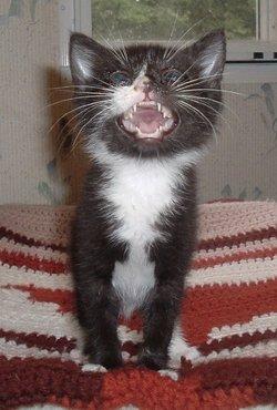 Tiny Feline Saved By Human Shopping at Pet Store — Bagheera