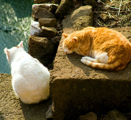 Two of the Felines Living at the Torre Argentina Cat Sanctuary