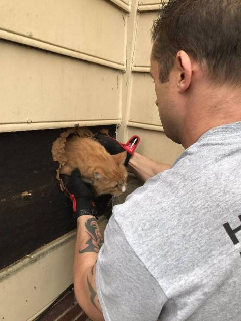 Firefighters Successfully Completed This Cat Rescue