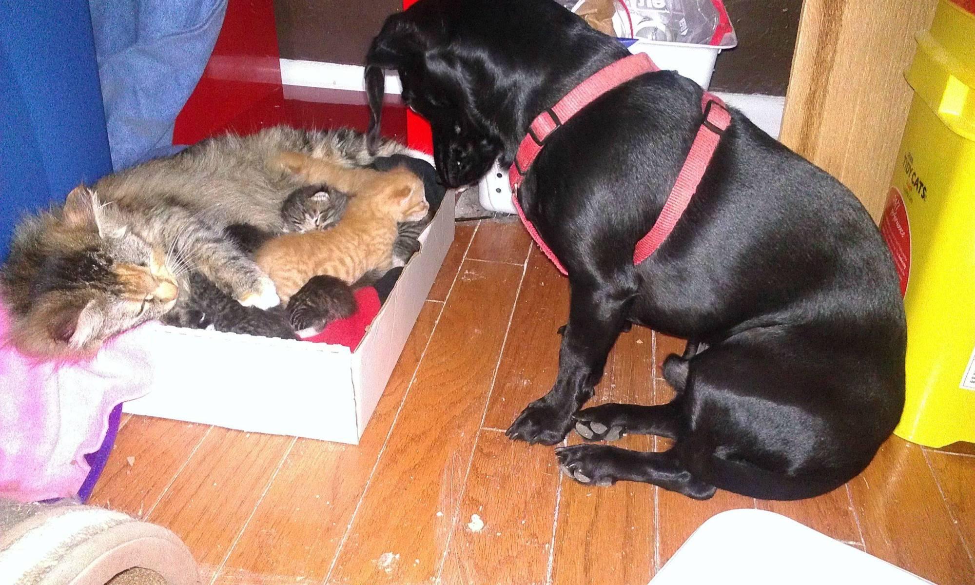 A Canine Helped a Feline Raise Her Kittens