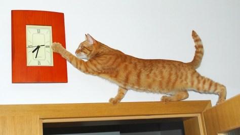 Feline Helping Adjust the Clock