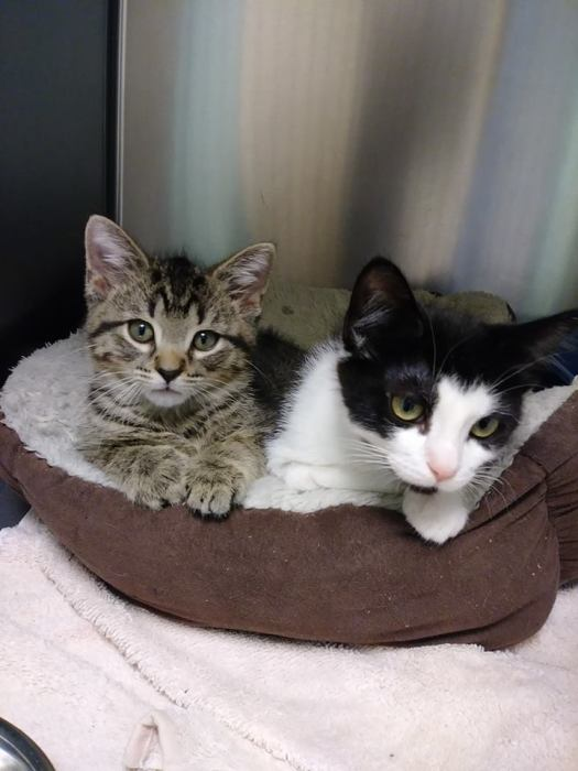 Help Brownie Bite and Dutchess Cupcake Find a Home