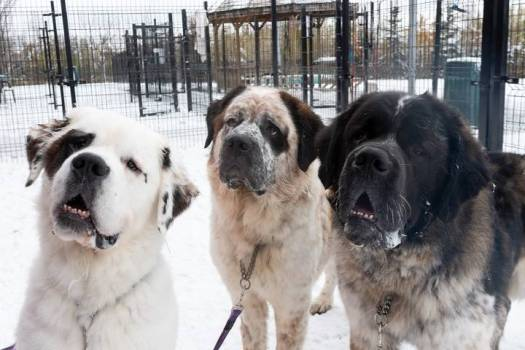 Edmonton Humane Society Wants to Find A Home for This Bonded Trio