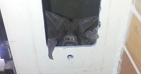 Dalla serranda appare un animale inaspettato