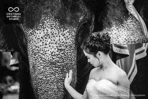 pre-weddng-angkor-wat-cambodia-elephant