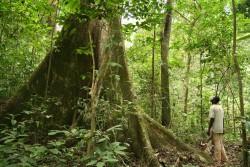 Une forêt tropicale au Gabon, le pays hôte de la Conférence ministérielle africaine sur l'environnement, qui a eu lieu du 10 au 11 juin 2017 à Libreville, la capitale. (photo publiée sur le site web du PNUE, copyright Alex Rouvin)