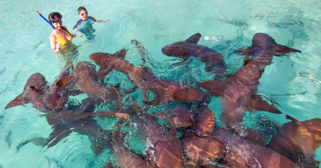 Swim with Nurse Sharks at Compass Cay, a short boat ride from Staniel Cay on our unique one day trip from florida to Bahamas. Our private flights to bahamas allow you to visit Staniel Cay in the Exuma Cays. Enquire with Bahamas Air Tours about our private bahamas charter flights.