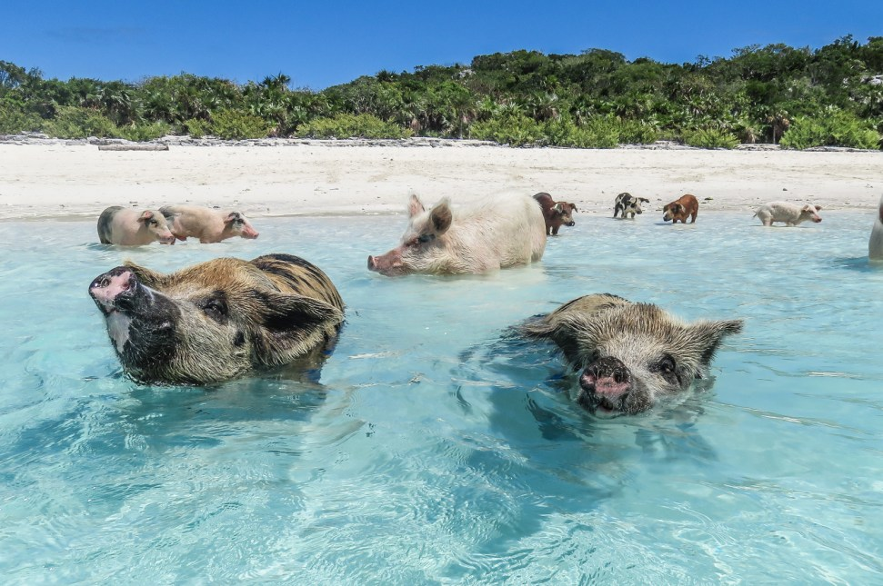 Bahamas Day Tours by Plane to the Swimming Pigs from Miami