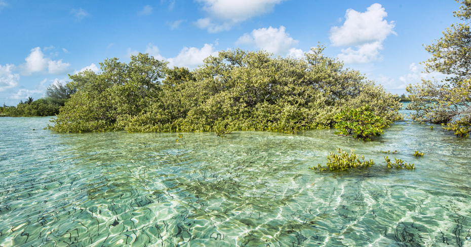 Bimini beaches, blue skies, bluegreen shallow salt waters with plant life. Visit bimini with Bahamas charter flights from Florida with Bahamas Air Tours