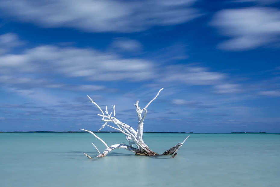 Lone Tree, Dunmore Town Bahamas on Harbour Island Eleuthera.