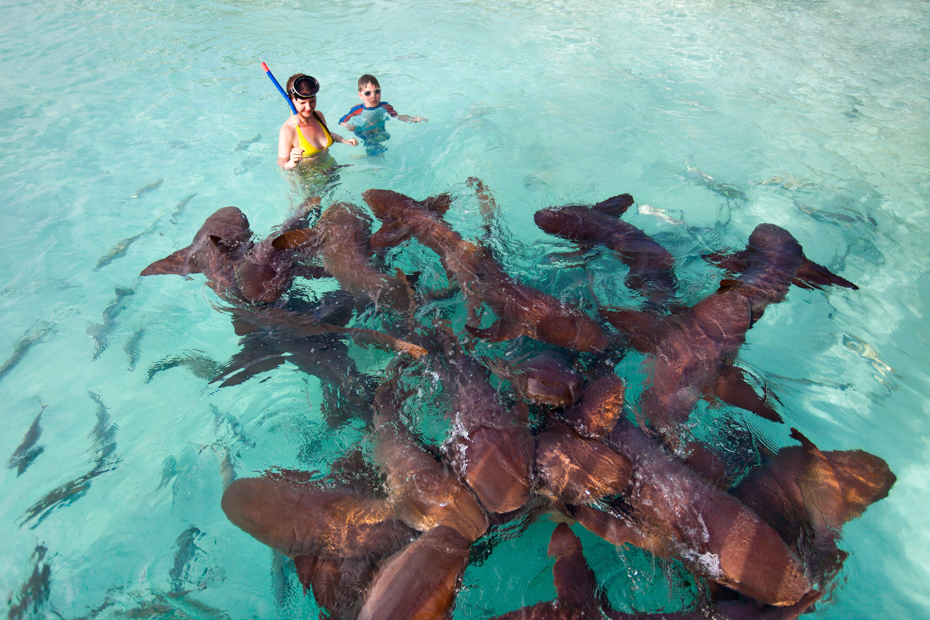 Mother and son swimming with nurse sharks. Join the Staniel Cay Tours on any of the many Staniel Cay Day Trips from Miami. There are also Staniel Cay Day tour from Florida and tours to Staniel Cay by flight. Day Trip to Staniel Cay in Luxury a part of the day tour to Staniel Cay with Us! Bahamas Air Tours gives you your guide to Day Trips to Bahamas by flights to Bahamas aboard Bahamas Air Charters to Swimming Pigs tours and the Exuma pigs on Pig Island at Pig Beach. Join one of our Staniel Cay Day trips on our Nassau to Staniel Cay day tour or opt for the Staniel Cay Day trips by the way of Bahamas Day Trips by plane. Trips to Bahamas to see pigs in Bahamas. Miami to Bahamas day trip is one of the top Florida attractions.