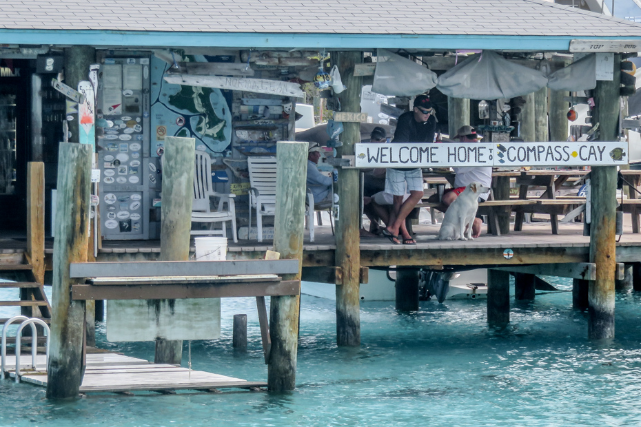Compass Cay Marina is located in the Exumas and can be visited from Nassau or Miami on a Bahamas Day Trip to visit the Compass Cay swim with sharks experience.