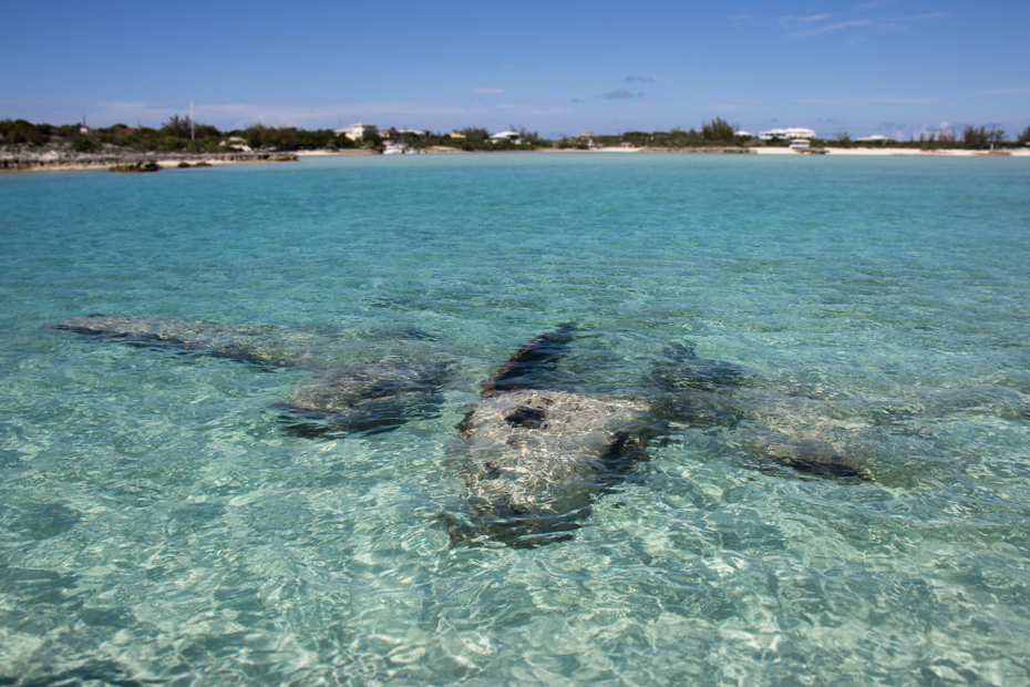 Remnants of the Exuma Plane Wreck at Staniel Cay in the Bahamas Exuma islands.