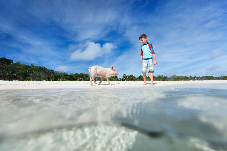 Everybody goes swimming with pigs when they take a Bahamas vacation! Pig Beach is constantly a great time with these Exuma pigs.