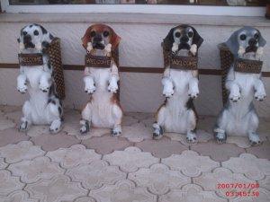 Şemsiyelik Köpek Heykelleri