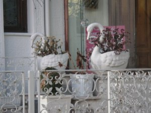 Kuğu Çiçeklik