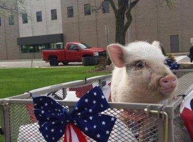 Porca candidata à prefeitura de cidade nos EUA se retira da campanha eleitoral