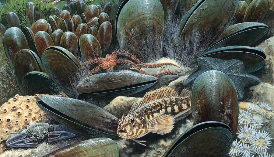 FEATURE | Mussel reef restoration project in the Hauraki Gulf, NZ