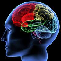 Dime cómo recuerdas y te diré cómo es tu cerebro