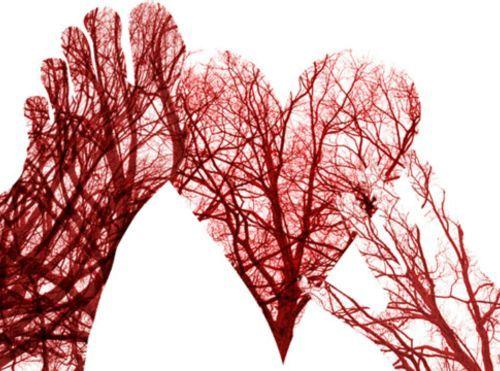Cuánta sangre bombea tu corazón al año